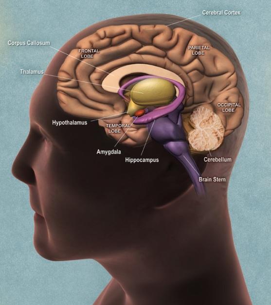 creirul